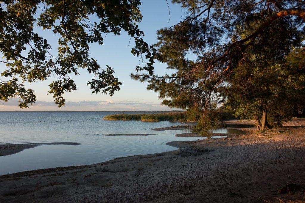 See Müritz der Mecklenburgische Seenplatte mit Bäumen die ins Bild ragen