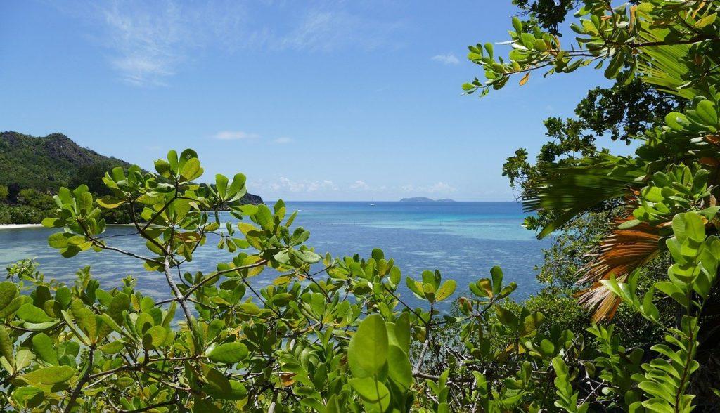 Blick durch die Mangroven der Insel Curieuse der Seychellen auf das Meer