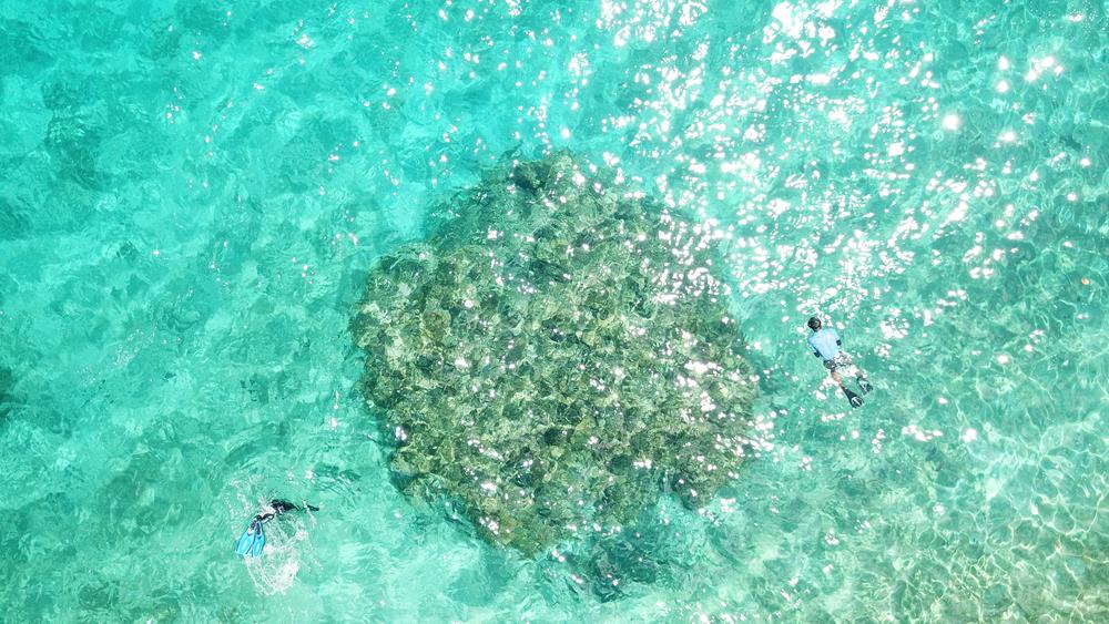 Korallenriffe im Meer vor den Medes Inseln